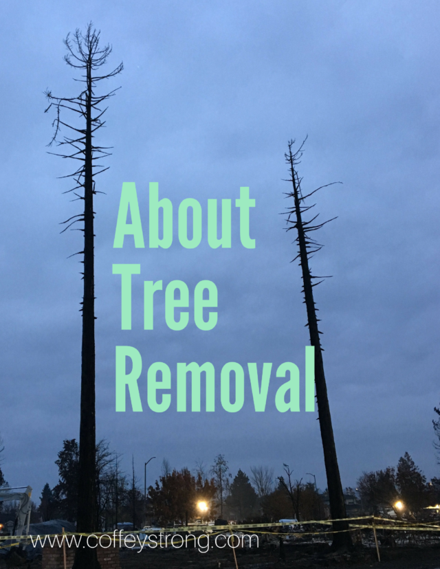 Tree Removal Questions